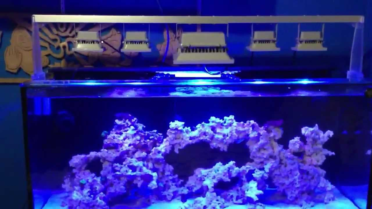 Meerwasser-Marine-Aquarium-mit-LED-Flutlicht-Fluter-Scheinwerfer-Aussenstrahler-10W-30W-50W
