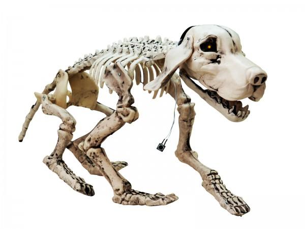 EUROPALMS Halloween Hundeskelett, 71x40x25cm