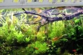 LED Fluter als Aquarienlampen