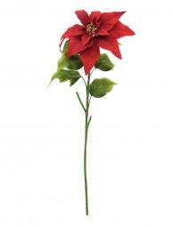 EUROPALMS Weihnachtsstern, rot, 70cm