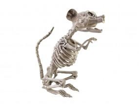 EUROPALMS Halloween Rattenskelett, 32x10x16cm