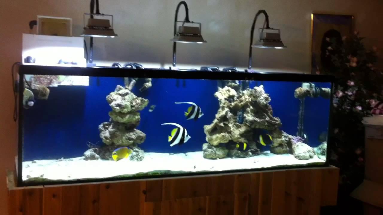 Meerwasser-Marine-Aquarium-mit-LED-Flutlicht-Fluter-Scheinwerfer-Aussenstrahler