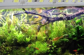 Aquarium LED Leiste 80cm mit 2m Kabel IP65